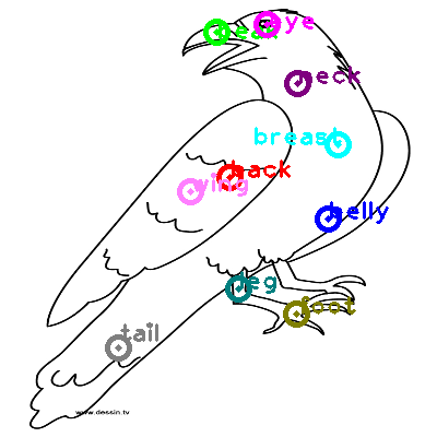 raven_0013.png