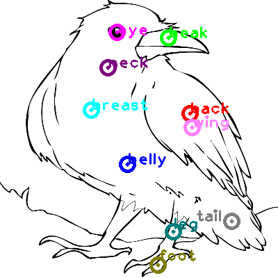 raven_0014.png