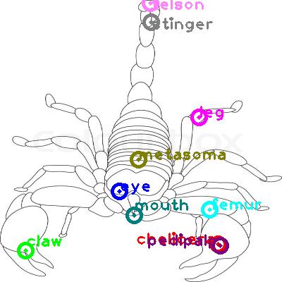 scorpion_0024.png