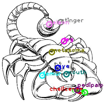 scorpion_0025.png