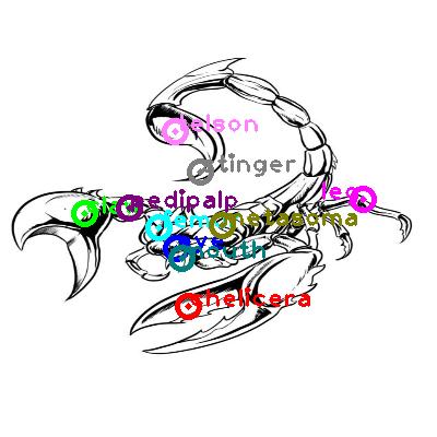 scorpion_0030.png