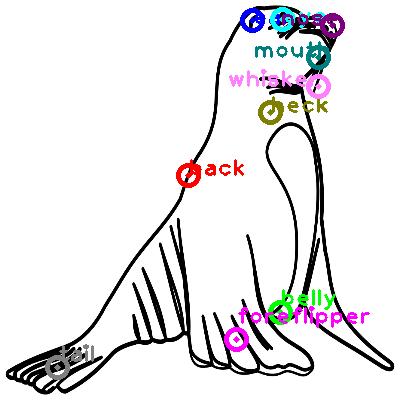 sea-lion_0000.png