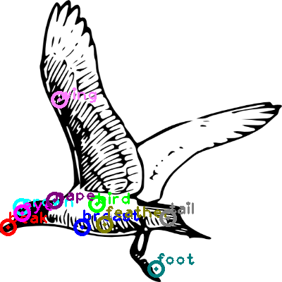 seagull_0001.png