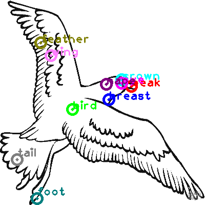 seagull_0006.png