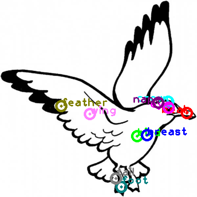 seagull_0015.png