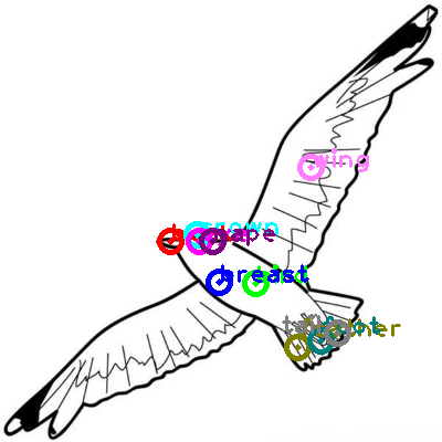 seagull_0016.png