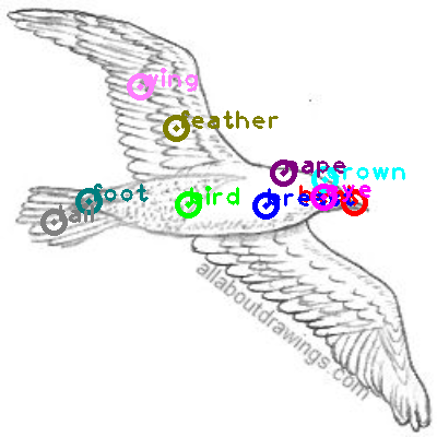 seagull_0020.png