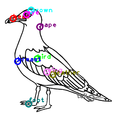 seagull_0022.png