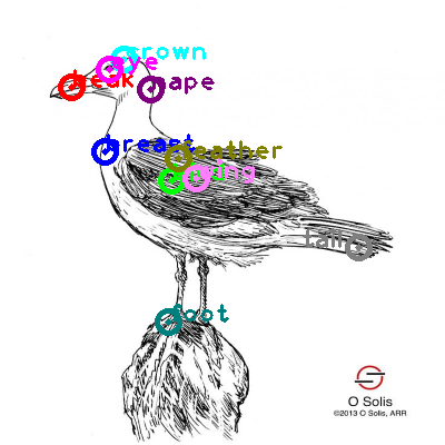 seagull_0023.png