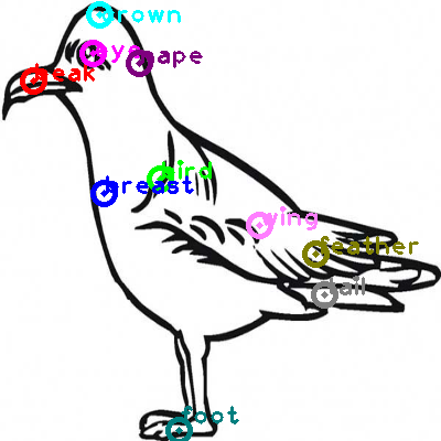 seagull_0024.png