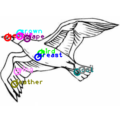 seagull_0030.png