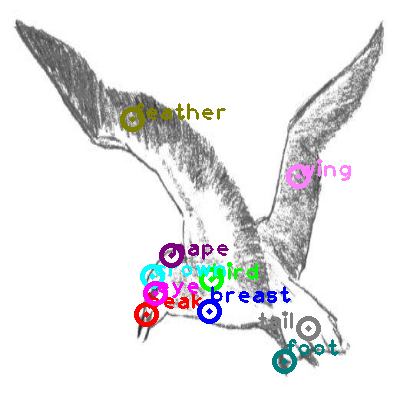 seagull_0031.png