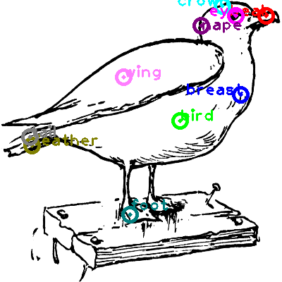 seagull_0033.png