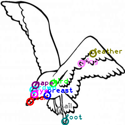 seagull_0034.png