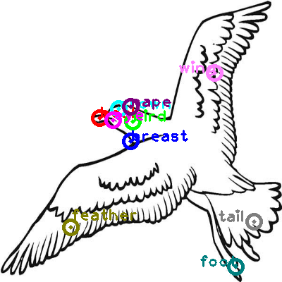 seagull_0037.png