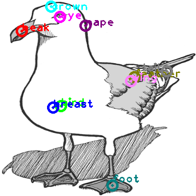 seagull_0038.png