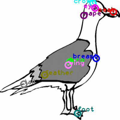 seagull_0040.png