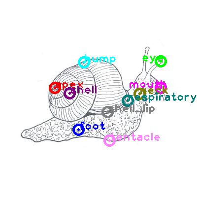 snail_0000.png