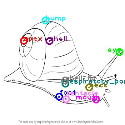 snail_0005.png