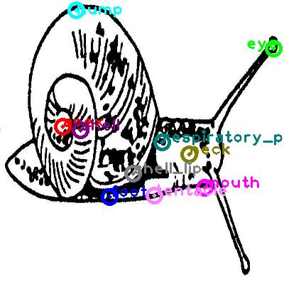 snail_0006.png
