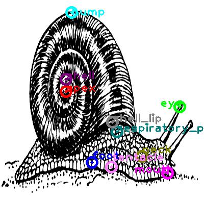 snail_0008.png