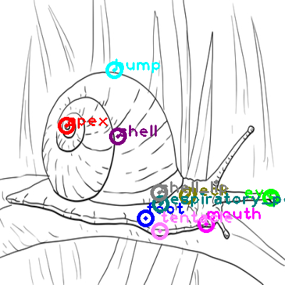 snail_0012.png