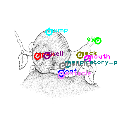 snail_0018.png