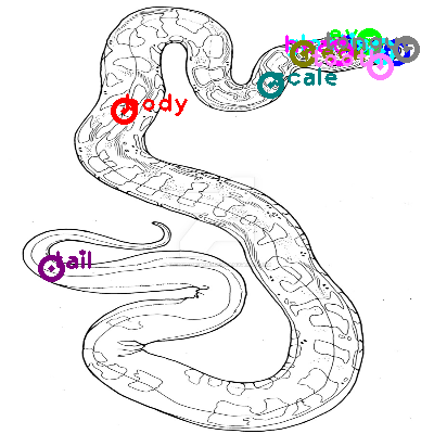 snake_0027.png