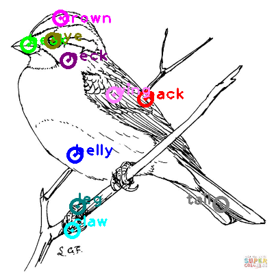 sparrow_0013.png