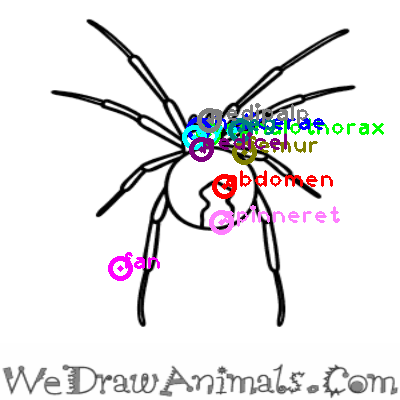 spider_0003.png