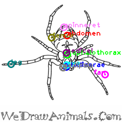spider_0009.png