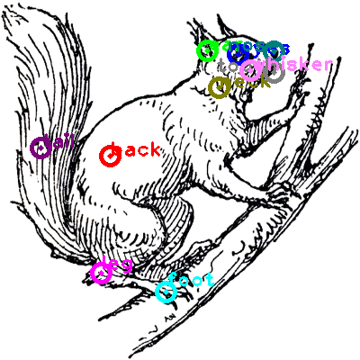 squirrel_0016.png
