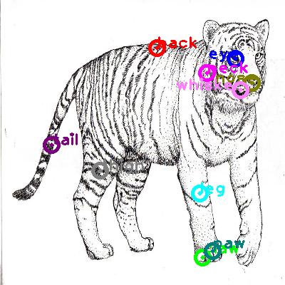 tiger_0010.png