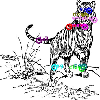 tiger_0011.png