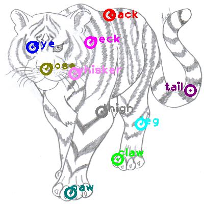 tiger_0018.png