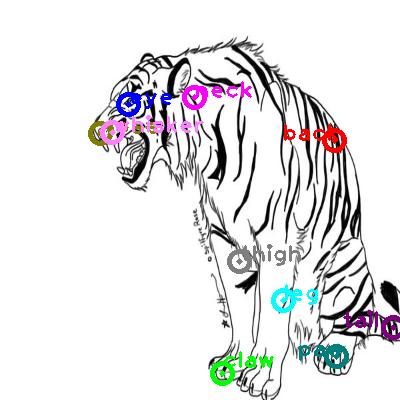 tiger_0024.png