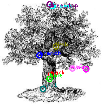 tree_0002.png