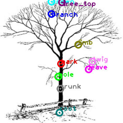tree_0016.png