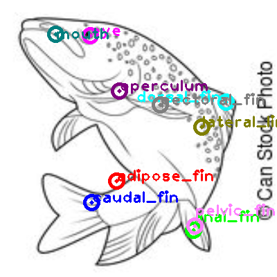 trout_0001.png