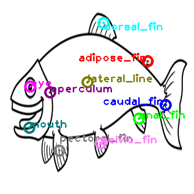 trout_0003.png