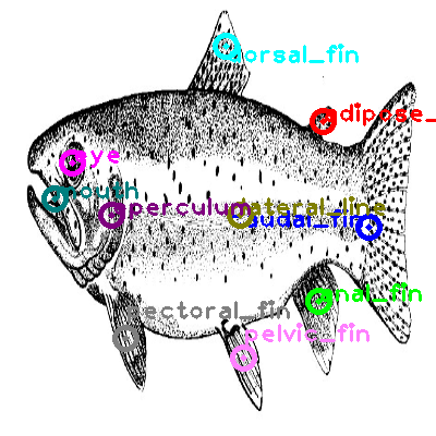 trout_0006.png