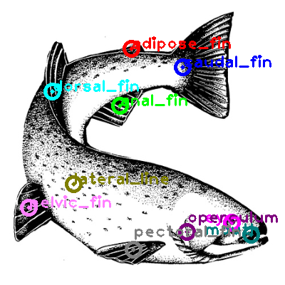 trout_0007.png