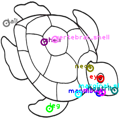 turtle_0001.png