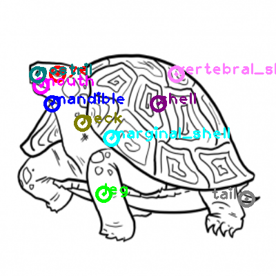 turtle_0003.png