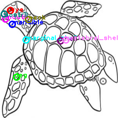 turtle_0004.png