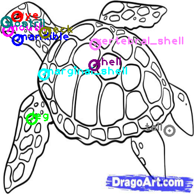 turtle_0008.png