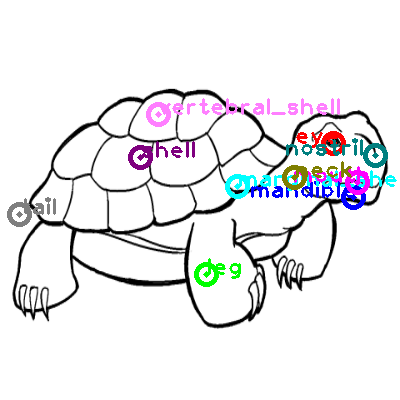 turtle_0010.png