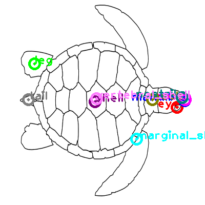 turtle_0011.png