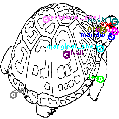 turtle_0016.png