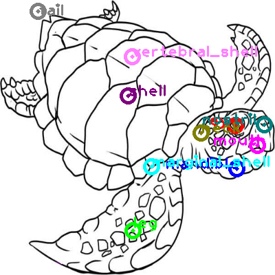 turtle_0017.png